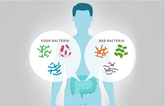 Probiotics are good bacteria for health